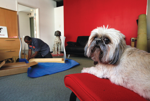 Pixie A Shih Tzu With Redrover Supervises As Mover Regional Zinn Unpacks At The Company S New Office 415 Front St Photos Lance Murphey